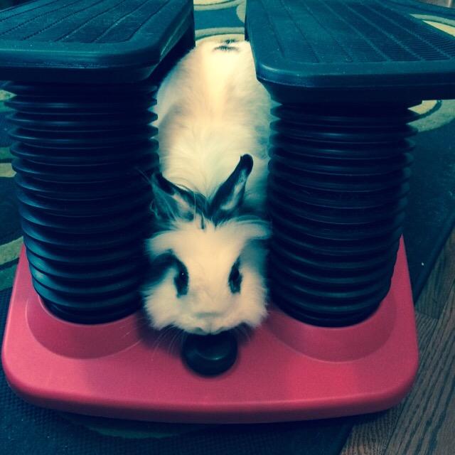 I dozen't need exercise, I iz just fluffy.